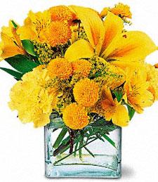 Blooming Sunshine