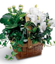 White Assortment Get Well Basket